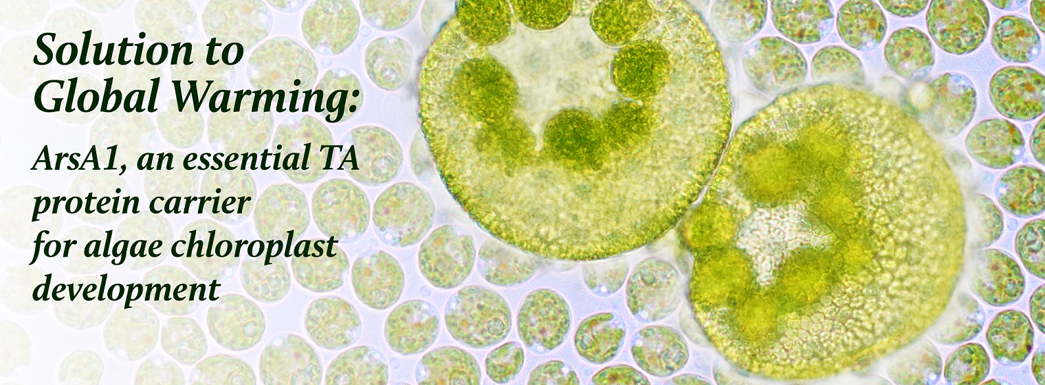 Solution to Global Warming: ArsA1, an essential TA protein carrier for algae chloroplast development